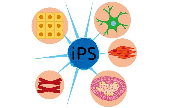 ヒト幹細胞培養液で副作用